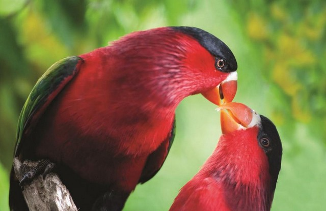 TPA & NCDC Launch Bird-watching Pocket Guide for Port Moresby